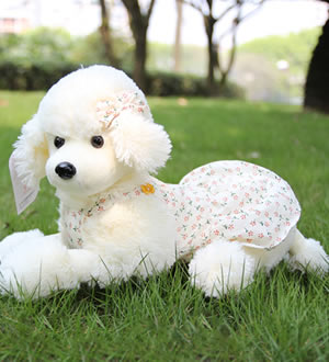 贵宾犬 可爱穿衣狗狗